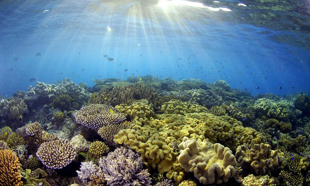 Sunlight illuminates the coral at the Great Barrier Reef, Queensland, Australia.