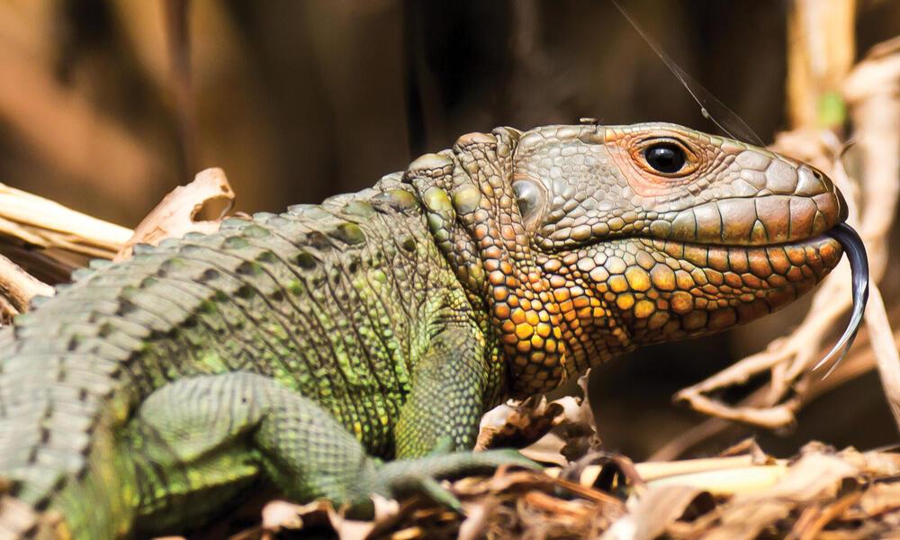 reptile on ground
