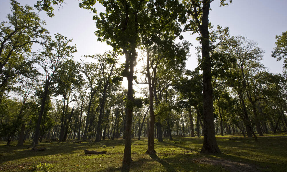 Responsible Forestry Restoring Degraded Forests