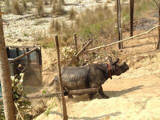 Rhino freed