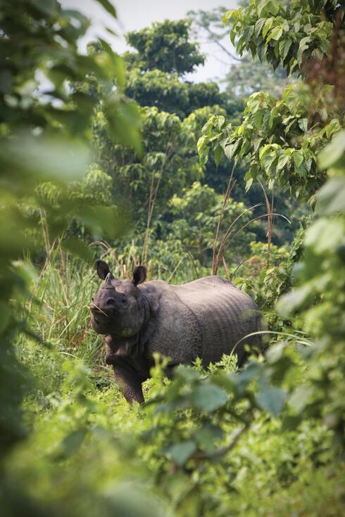 Rhino in Nepal's Bardia National Park