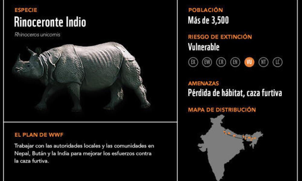 Rinoceronte indio2
