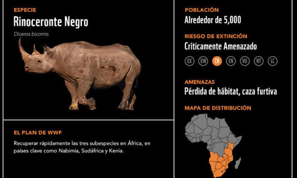 Rinoceronte negro2