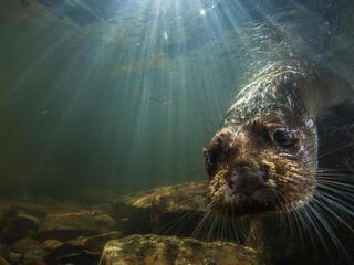 River Otter Magazine Fall 2017