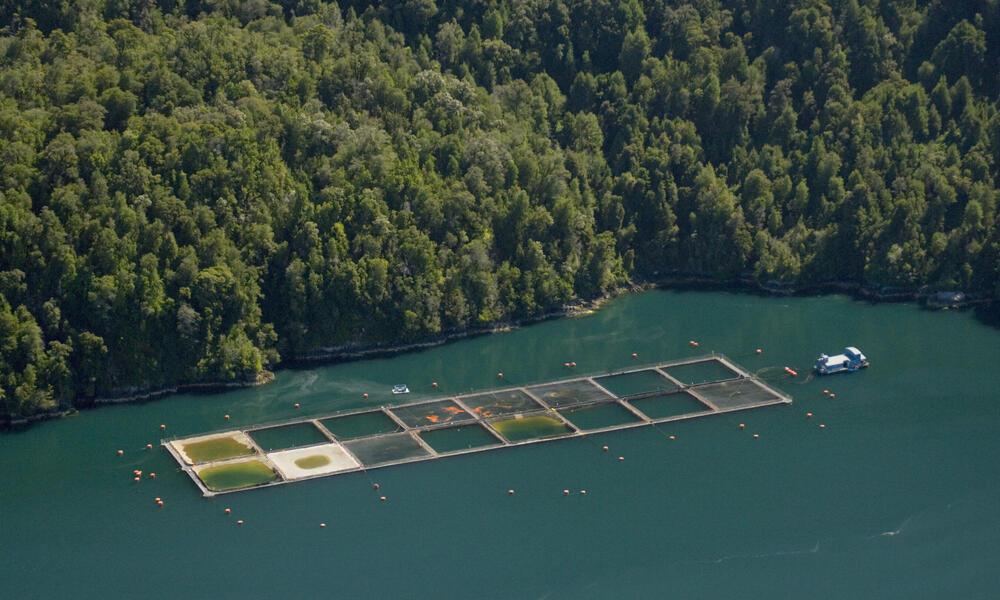 Saltwater salmon farm in Chile