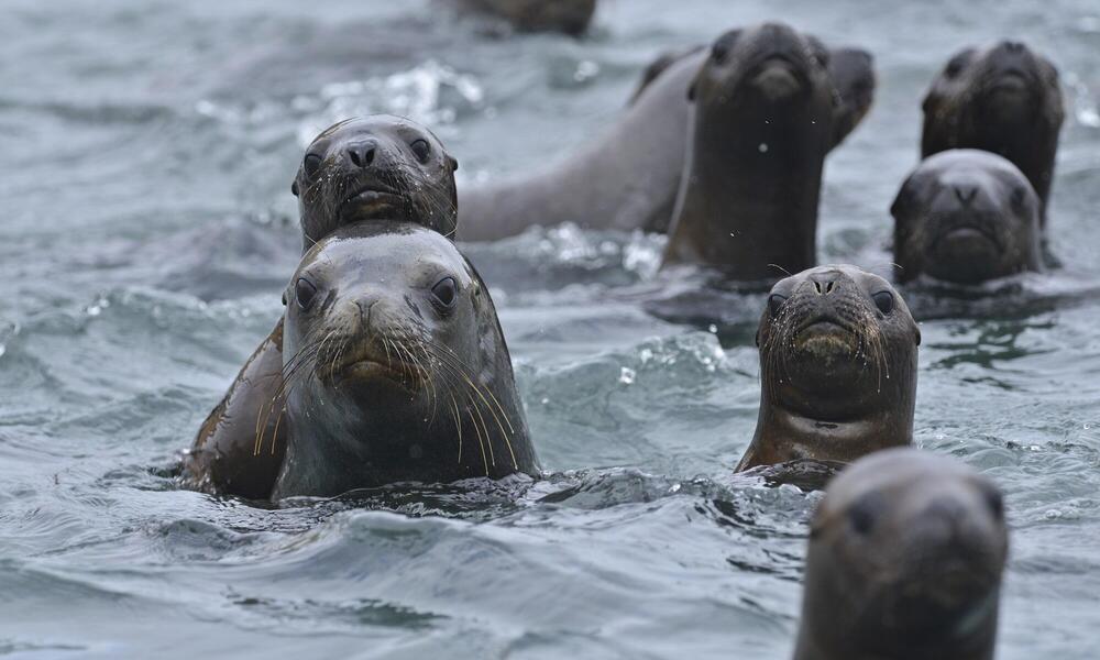 Sea Lions Paracas reserve, Peru