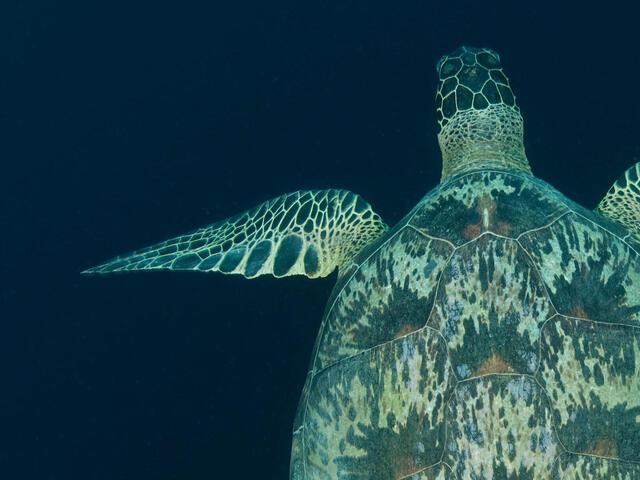 Sea Turtle Leadership Partners