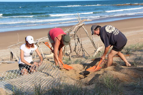 digging hole for sea turtle device