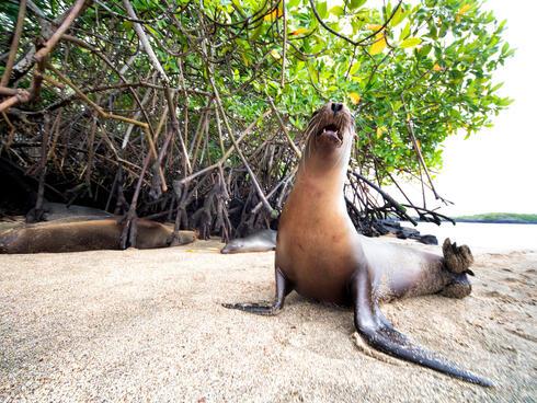a seal on a beach