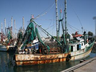 Shrimp fishery, Mexico