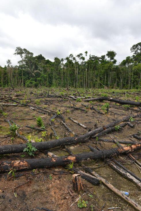 Slash and burn agriculture Peru