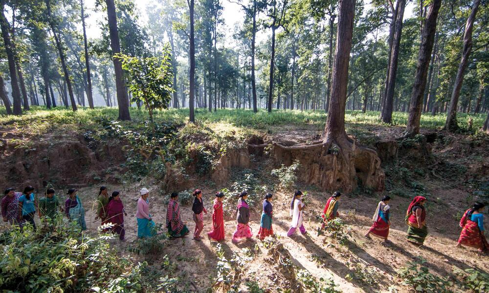 After driving from their village and climbing over a fence they built, women from Jalpa's group head into the forest to pull up invasive weeds.