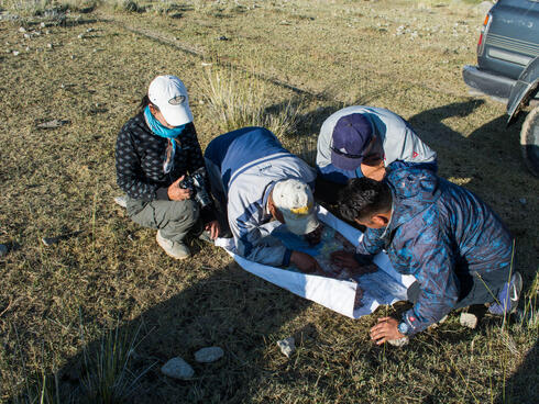 A team of surveyors look at a paper on the ground as they count snow leopards in Mongolia