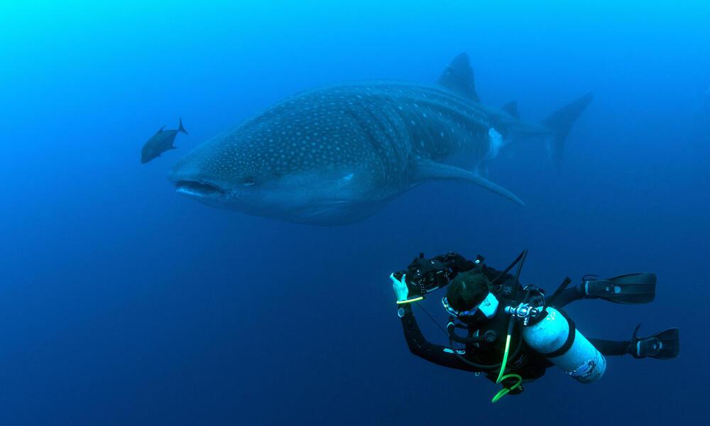 Sofia Green scuba diving