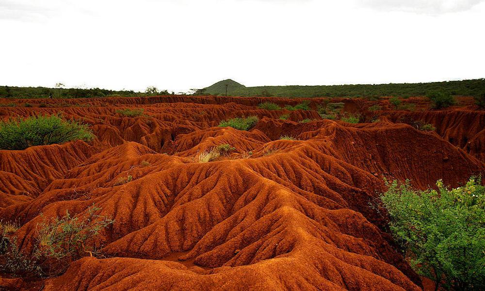 Guidelines to avoid overgrazing