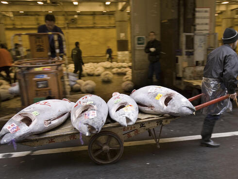 Sold tuna taken away to be delivered