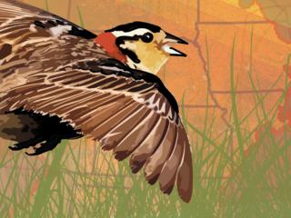 An illustration of a songbird flying over grasslands