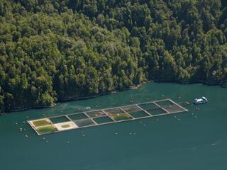 Southern Chile salmon farming