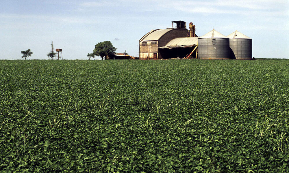 Soy beans plantation