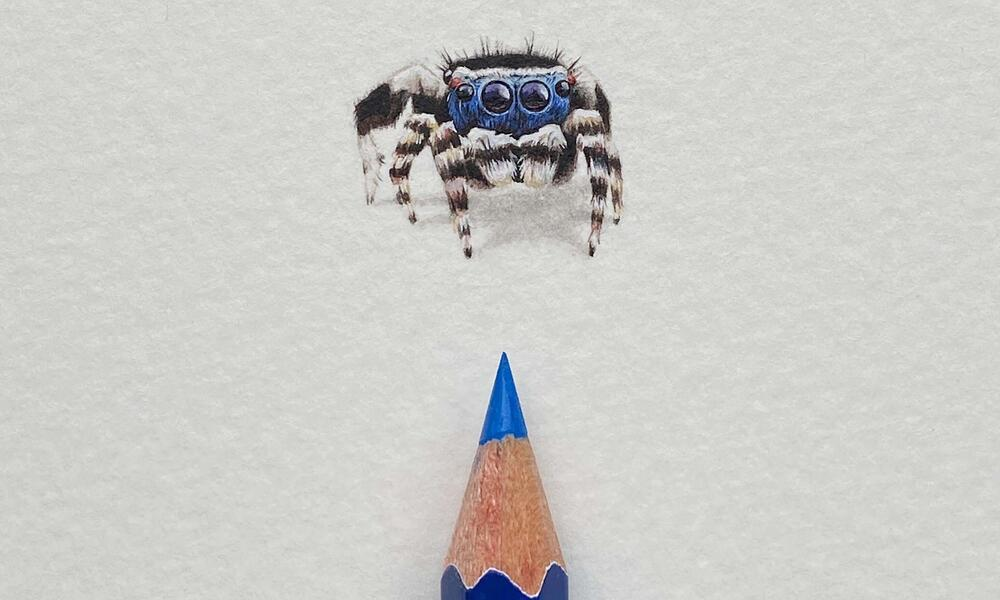 Pencil drawing of a tiny spider