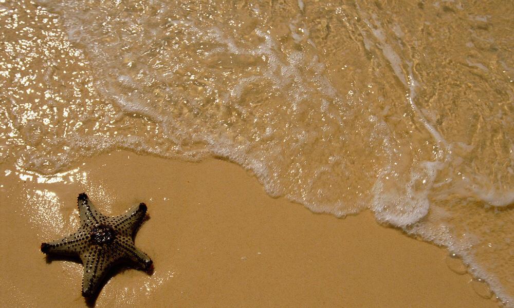 Seastar or Starfish washed up on sand beach by sea, Queensland, Australia.