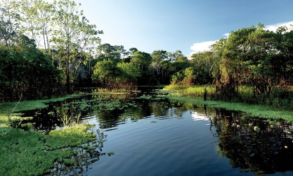 still water in amazon