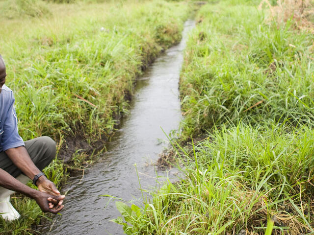 Water sourced from an irrigation project, which diverts water from the river to farmland.