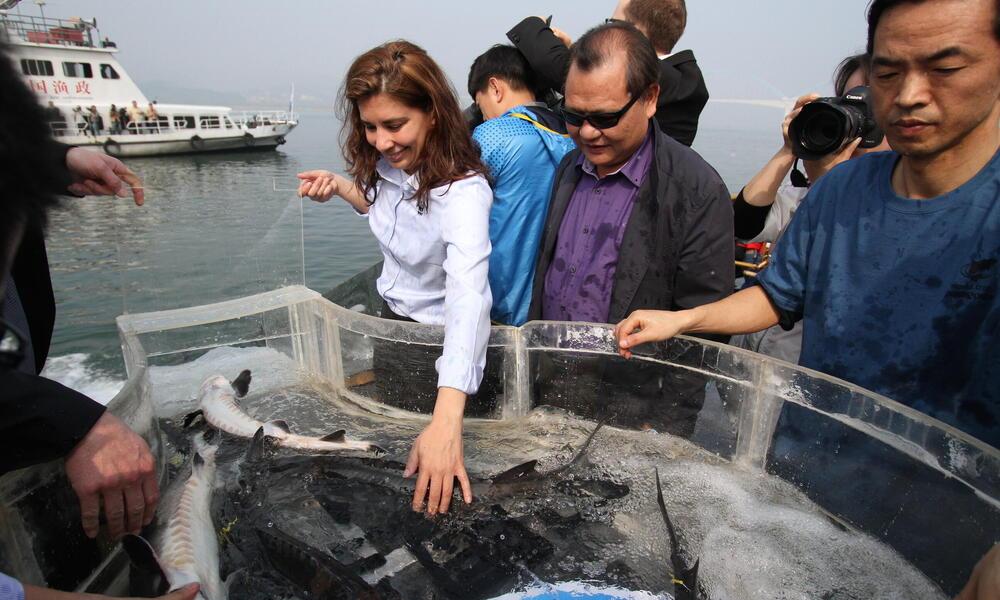 releasing sturgeon into yangtze