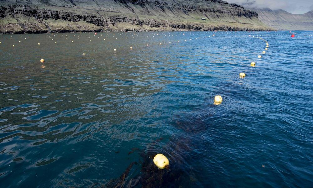 Buoys on top of the water holding up seaweed lines