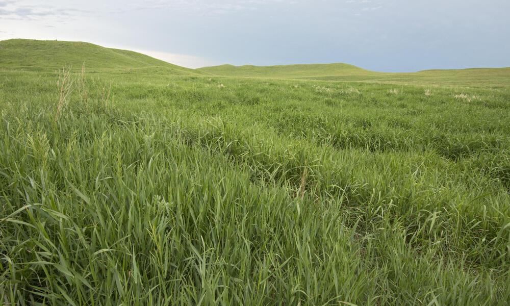 Healthy grasslands, Lowry, South Dakota