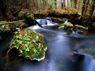 Stream in temperate forest
