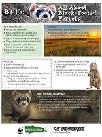 BFFs: All About Black-Footed Ferrets Brochure