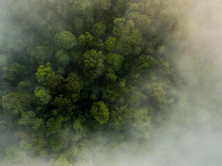 Thirty Hills forest from above