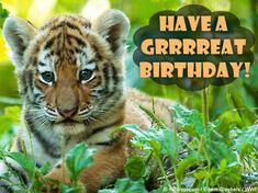 Birthday ecard with cute baby tiger