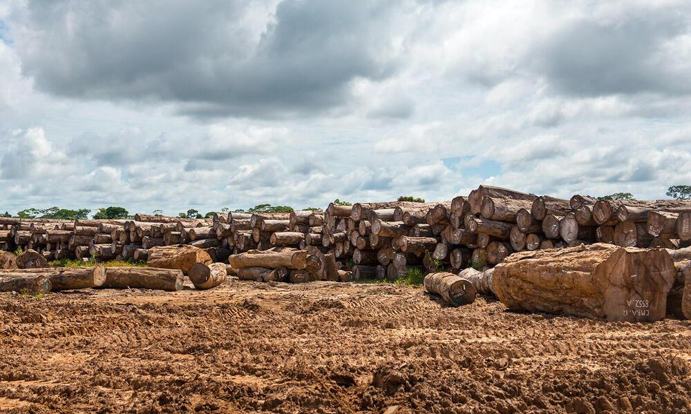 Timber in Peru