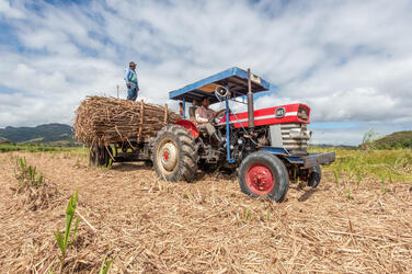 Man stands on red tractor in field harvesting surgarcane