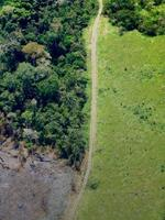 Using Public Data Platforms to Assess Deforestation Risks Within Jurisdictions Brochure
