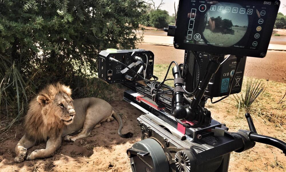 A behind the shots photo of a virtual reality camera filming a lion lying down in the shadow of a bush