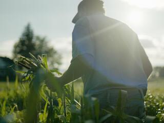 a farmer during harvest