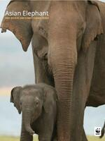 Asian Elephant: WWF Wildlife and Climate Change Series Brochure