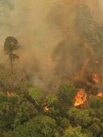 WWF Emergency Fund for Amazon Brochure