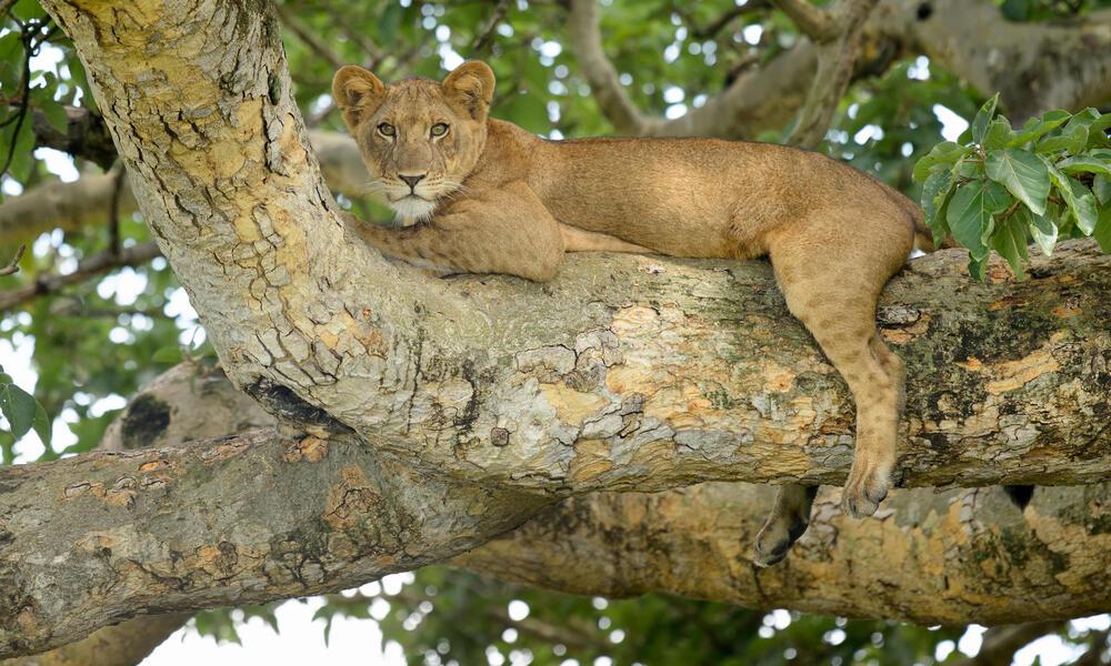 WWF Uganda Ape Expedition Cat