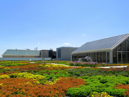 Green roof at WWF headquarters, Washington D.C.