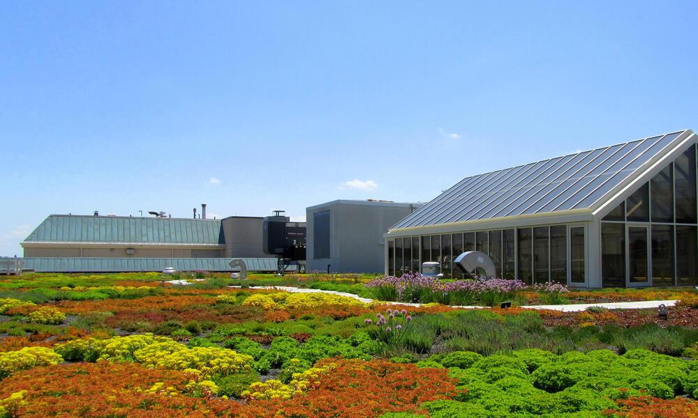 WWF HQ green roof