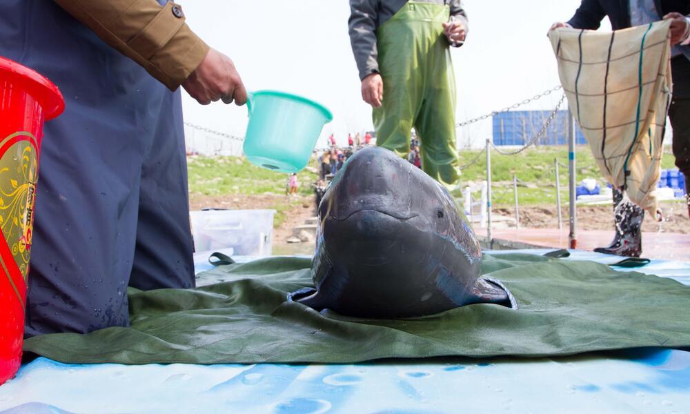 keeping porpoise wet