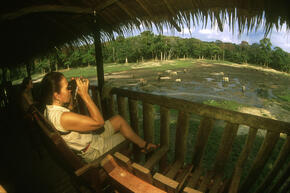 Western Lowland Gorilla Developing Ecotourism