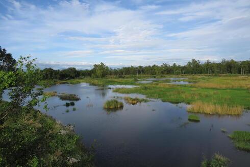 Landscape photo of a wetland in Nepal