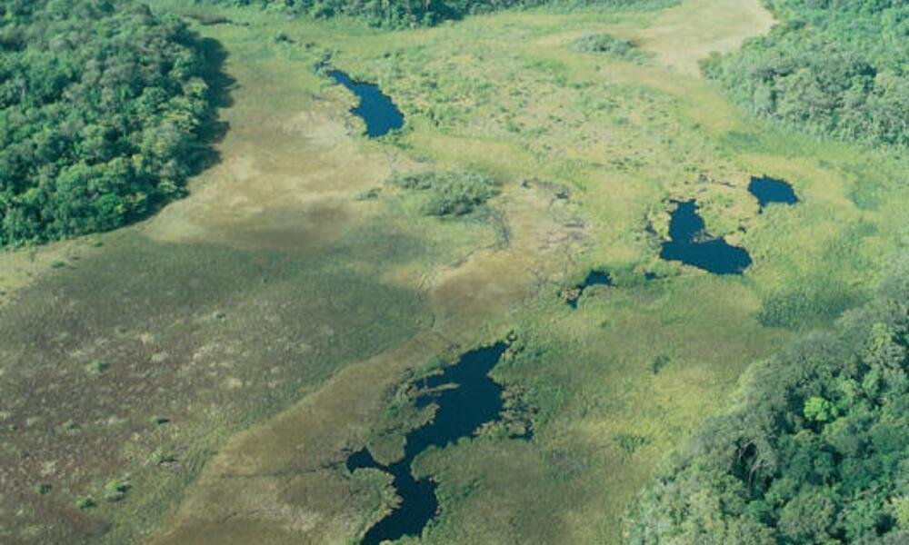 Yiyi wetlands, in the Sinnamary commune