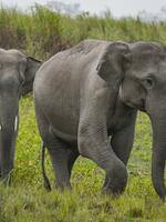 Watch your Noodles for Elephants' Sake Brochure