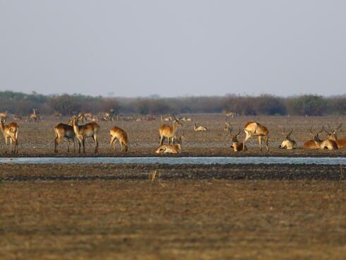 wildlife in a field